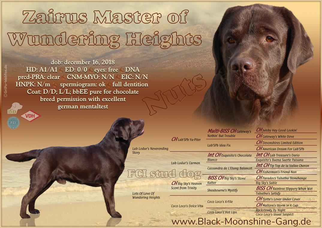 Zairus Master Of Wundering Heights