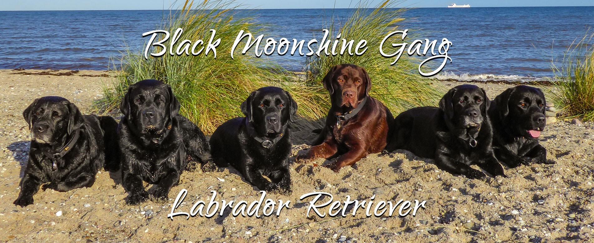 Black Moonshine Gang