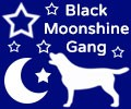 Black Moonshine Gang Labrador Retriever
